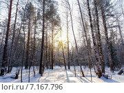 Купить «Солнечные лучи пробиваются сквозь деревья в зимнем лесу», фото № 7167796, снято 8 февраля 2015 г. (c) Евгений Ткачёв / Фотобанк Лори