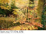 Купить «Осенний сезон в парке», фото № 7174376, снято 18 ноября 2014 г. (c) Татьяна Кахилл / Фотобанк Лори