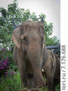 Слон (2012 год). Стоковое фото, фотограф Alexander L. / Фотобанк Лори
