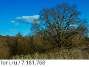 Прибрежный лозняк и сухая трава. Стоковое фото, фотограф Андрей Подольский / Фотобанк Лори