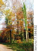 Купить «Осенний лес», фото № 7184632, снято 18 ноября 2014 г. (c) Татьяна Кахилл / Фотобанк Лори