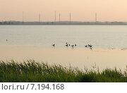 Раннее утро на Калининградском заливе. Птицы на воде. Стоковое фото, фотограф Svet / Фотобанк Лори