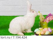 Белый пасхальный кролик с цветами и пасхальными яйцами в корзинке. Стоковое фото, фотограф Евгения Устиновская / Фотобанк Лори
