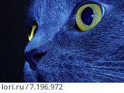 Яркий кот. Стоковое фото, фотограф Евгений Брызгалов / Фотобанк Лори