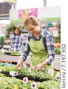Купить «happy woman taking care of seedling in greenhouse», фото № 7197932, снято 25 февраля 2015 г. (c) Syda Productions / Фотобанк Лори