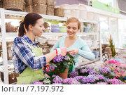 Купить «happy women choosing flowers in greenhouse», фото № 7197972, снято 25 февраля 2015 г. (c) Syda Productions / Фотобанк Лори