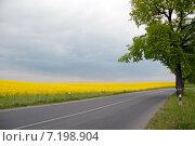 Купить «Дорога вдоль рапсового поля», эксклюзивное фото № 7198904, снято 15 октября 2018 г. (c) Svet / Фотобанк Лори