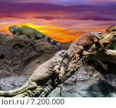 Купить «Few lizards in sunset», фото № 7200000, снято 23 марта 2019 г. (c) Яков Филимонов / Фотобанк Лори