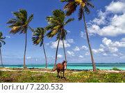 Ослик и океан. Стоковое фото, фотограф олег данильченко / Фотобанк Лори