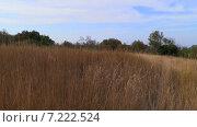 Луг заросший сухой травой на плато Мангуп в Крыму (2014 год). Стоковое видео, видеограф Арташес Оганджанян / Фотобанк Лори