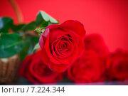 Купить «Розы на красном фоне», фото № 7224344, снято 6 апреля 2015 г. (c) Peredniankina / Фотобанк Лори
