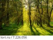 Купить «Закат в осеннем парке», фото № 7226056, снято 20 ноября 2017 г. (c) Зезелина Марина / Фотобанк Лори