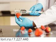 Купить «Food scientist measuring a strawberry», фото № 7227440, снято 29 июля 2014 г. (c) Wavebreak Media / Фотобанк Лори