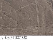 peru - nazca lines, the pelicanPeru, Lines of Nasca, Aerial View, the Pelican. Стоковое фото, агентство BE&W Photo / Фотобанк Лори
