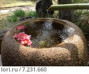Источник воды, каменная чаша с цветами. Стоковое фото, фотограф Светлана Давыдова / Фотобанк Лори