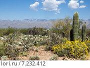 Купить «Цветение пустыни  весной  в Национальный парке Сагуаро, Аризона, США», фото № 7232412, снято 31 марта 2015 г. (c) Ирина Кожемякина / Фотобанк Лори