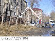 Купить «Весна. Вырубка деревьев в городе. Тюмень.», фото № 7277104, снято 20 мая 2019 г. (c) Землянникова Вероника / Фотобанк Лори