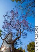 Центральный парк Аламеда и фиолетовые деревья в столице Мексики (2014 год). Стоковое фото, фотограф Сергей Новиков / Фотобанк Лори