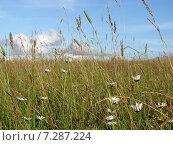 Русское поле. Стоковое фото, фотограф Виктор Мандриков / Фотобанк Лори