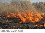 Купить «Огненная стихия», фото № 7294568, снято 12 апреля 2015 г. (c) Лариса Вишневская / Фотобанк Лори