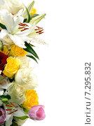 Композиция из различных цветов на белом фоне. Стоковое фото, фотограф VIACHESLAV KRYLOV / Фотобанк Лори