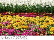 Купить «Декоративные цветы в парке Гюльхане весной Стамбул, Турция», фото № 7307416, снято 16 апреля 2015 г. (c) Илюхина Наталья / Фотобанк Лори
