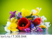 Купить «Букет весенних цветов на зеленом фоне», фото № 7308844, снято 24 апреля 2015 г. (c) Peredniankina / Фотобанк Лори
