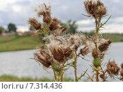 Полевые цветы. Стоковое фото, фотограф Андрей Каретников / Фотобанк Лори