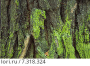 Зеленая кора дерева. Стоковое фото, фотограф Сотникова Кристина / Фотобанк Лори