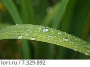 Купить «Капли росы на траве», фото № 7329892, снято 7 июня 2013 г. (c) Дмитрий Чулков / Фотобанк Лори