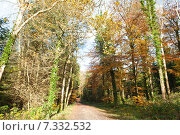 Купить «Осенний лес», фото № 7332532, снято 18 ноября 2014 г. (c) Татьяна Кахилл / Фотобанк Лори