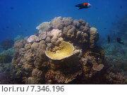 Купить «Australia – Queensland – Great Barrier ReefAustralia, Queensland, Great Barrier Reef, Underwater», фото № 7346196, снято 19 октября 2019 г. (c) BE&W Photo / Фотобанк Лори