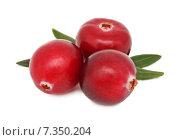 Три ягоды спелой клюквы на белом фоне. Стоковое фото, фотограф Самохвалов Артем / Фотобанк Лори