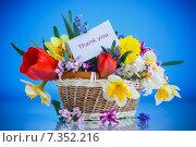 Купить «Букет весенних цветов в корзине на синем фоне», фото № 7352216, снято 24 апреля 2015 г. (c) Peredniankina / Фотобанк Лори
