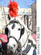 Лошадь с плюмажем. Стоковое фото, фотограф Светлана Хромова / Фотобанк Лори