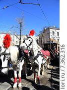 Лошади с плюмажем (2015 год). Редакционное фото, фотограф Светлана Хромова / Фотобанк Лори