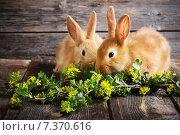 Купить «two rabbits on wooden background», фото № 7370616, снято 1 мая 2015 г. (c) Майя Крученкова / Фотобанк Лори