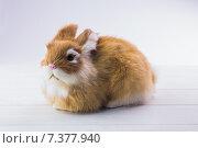 Купить «Ginger bunny rabbit», фото № 7377940, снято 6 февраля 2015 г. (c) Wavebreak Media / Фотобанк Лори