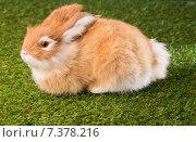 Купить «Ginger bunny rabbit», фото № 7378216, снято 6 февраля 2015 г. (c) Wavebreak Media / Фотобанк Лори