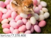 Купить «Stuffed chick with easter eggs», фото № 7378408, снято 6 февраля 2015 г. (c) Wavebreak Media / Фотобанк Лори