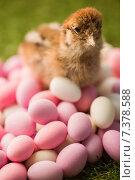 Купить «Stuffed chick with easter eggs», фото № 7378588, снято 6 февраля 2015 г. (c) Wavebreak Media / Фотобанк Лори