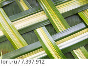 Купить «green palm tree leaf grid texture», фото № 7397912, снято 7 февраля 2015 г. (c) Syda Productions / Фотобанк Лори