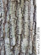 Купить «tree trunk bark texture», фото № 7397916, снято 12 февраля 2015 г. (c) Syda Productions / Фотобанк Лори