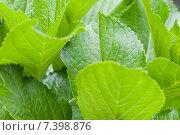 Купить «green leafs», фото № 7398876, снято 27 апреля 2009 г. (c) Syda Productions / Фотобанк Лори