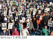 """Купить «""""Бессмертный полк"""". Санкт-Петербург. На Невском проспекте», эксклюзивное фото № 7418324, снято 9 мая 2015 г. (c) Александр Алексеев / Фотобанк Лори"""