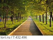 Пешеходная дорожка в парке. Весна (2015 год). Стоковое фото, фотограф Юрий Морозов / Фотобанк Лори