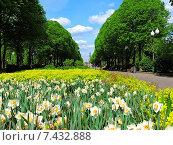 Купить «Весна в парке имени Горького в Москве», эксклюзивное фото № 7432888, снято 14 мая 2015 г. (c) lana1501 / Фотобанк Лори