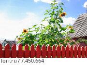 Купить «Дачный участок с домиком. Фрагмент», эксклюзивное фото № 7450664, снято 18 августа 2013 г. (c) Алёшина Оксана / Фотобанк Лори
