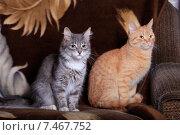 Купить «Серая и рыжая кошки сидят рядом», фото № 7467752, снято 22 мая 2015 г. (c) Яна Королёва / Фотобанк Лори