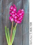 Розовые гиацинты на деревянном фоне. Стоковое фото, фотограф Ирина Буракова / Фотобанк Лори
